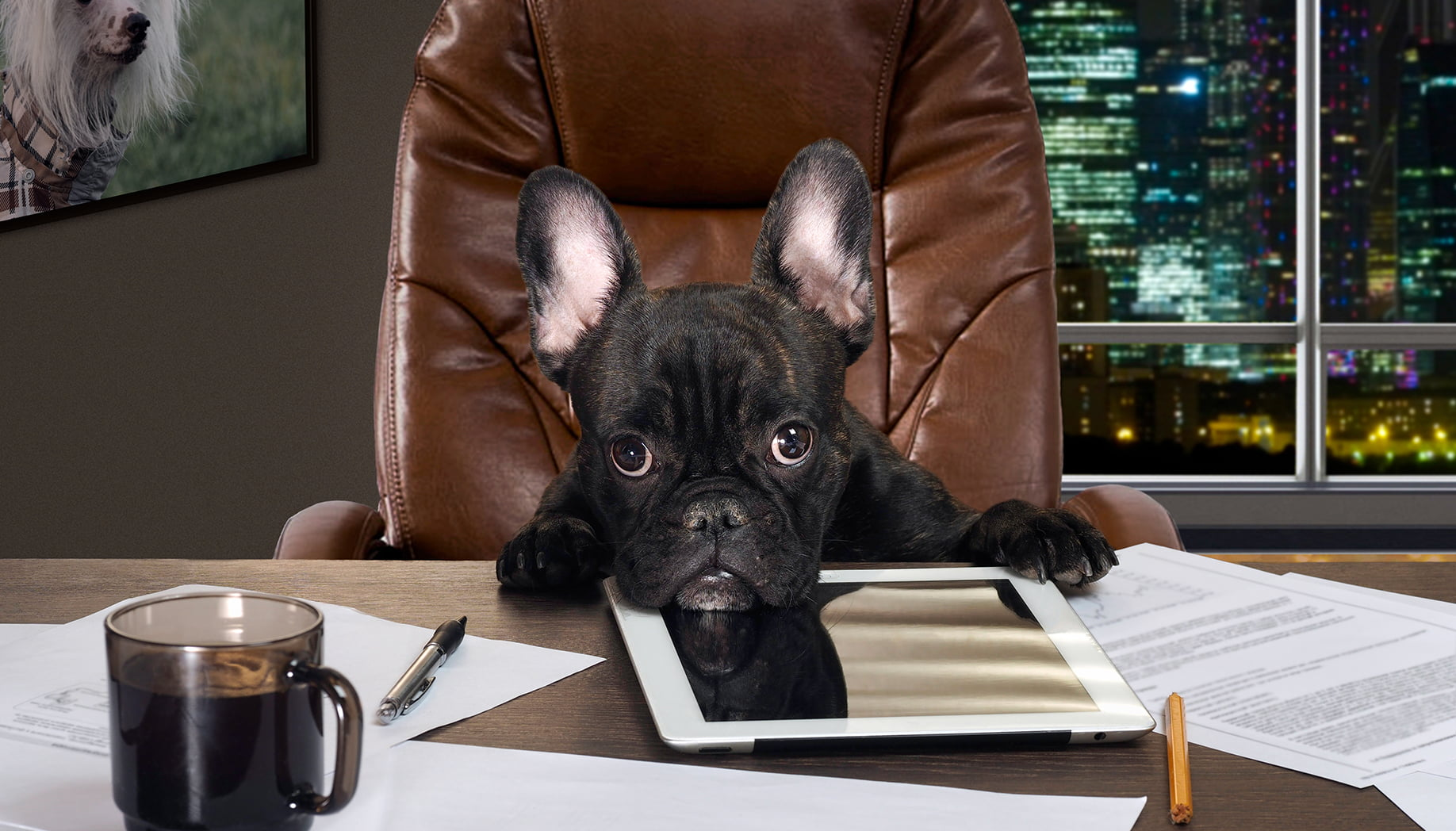 Want To Be Top Dog at Your Office? DO THIS!